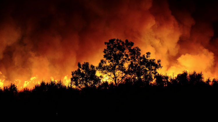 Bushfire (Source: Flickr)