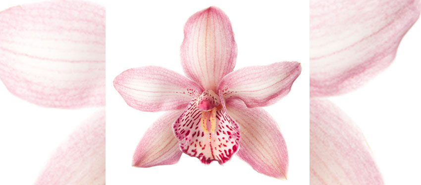 intersex orchid symbol